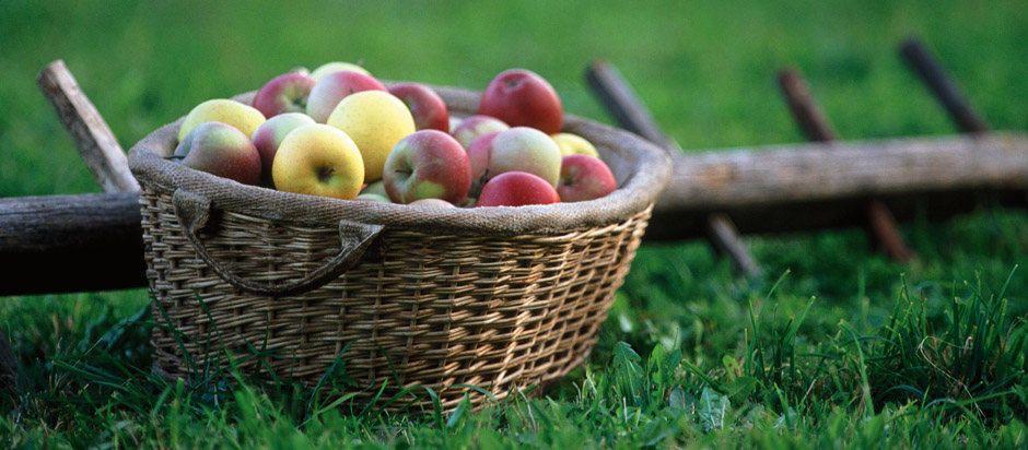 dia-del-frutero-manzanas